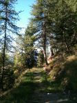 Forest trails lead to Plagne 1800